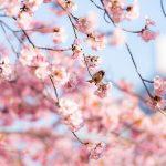樹の名つけられ | 俳句さんに似合う香水を見つけてあげる(8)