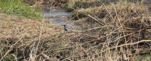 春の笹ヶ瀬川
